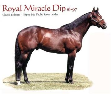 Royal Miracle Dip